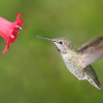 Birds in the Garden – A Mixed Blessing